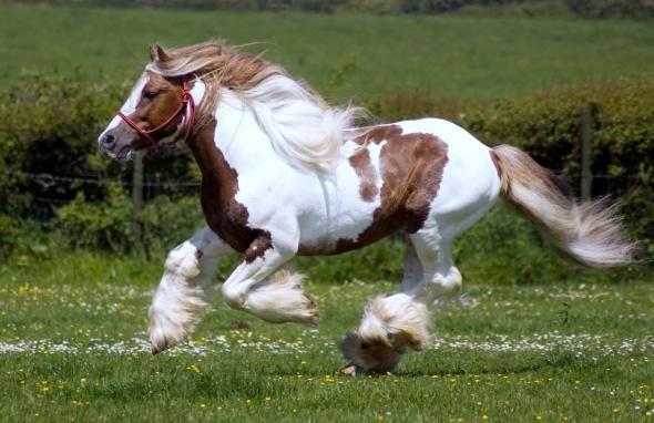 Красивые лошади в сборнике новых обоев и фото