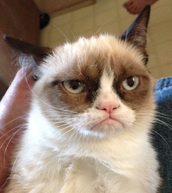 zack showed this one to me today @Kasey Cerny (said it'd be on pinterest next week, so i decided to scoop it!) this guy looks like my grandpa! really :O) Grumpy Cat - Imgur