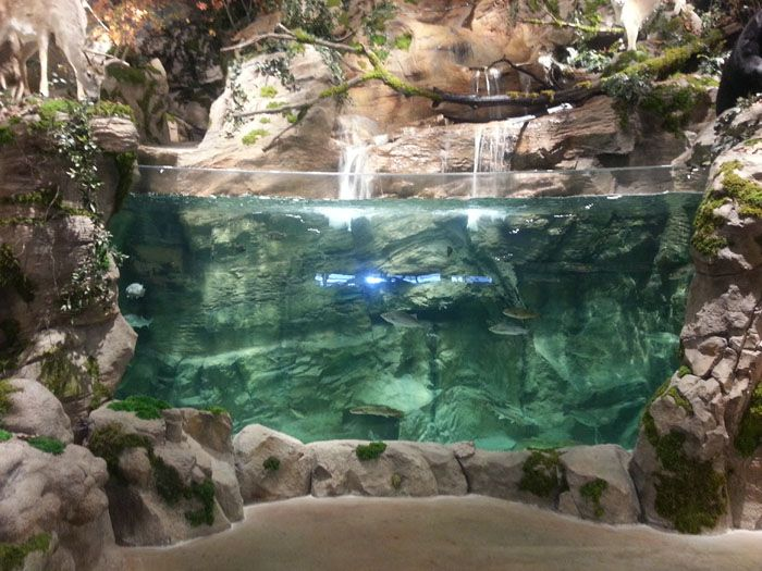 10 best bass pro shops images on pinterest bass pro shop for Bass fish tank