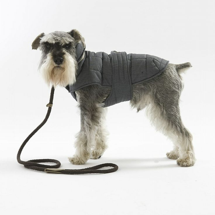 The TOP 6 BEST Winter Dog Coats this season. http://prettyfluffy.com/trends-shopping/latest-trends/top-6-winter-coats-for-dogs