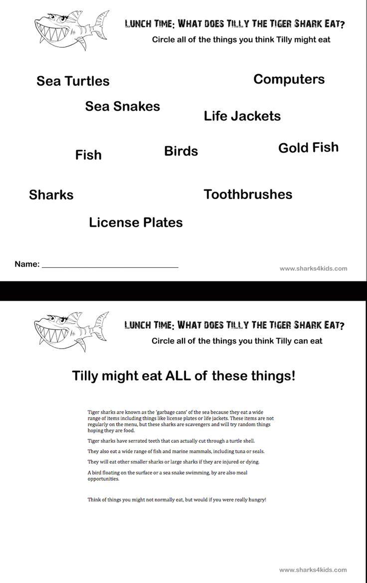 15 best shark education activities images on pinterest sharks