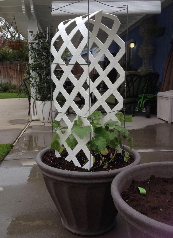Leftover Lattice Cucumber Trellis Love The Garden