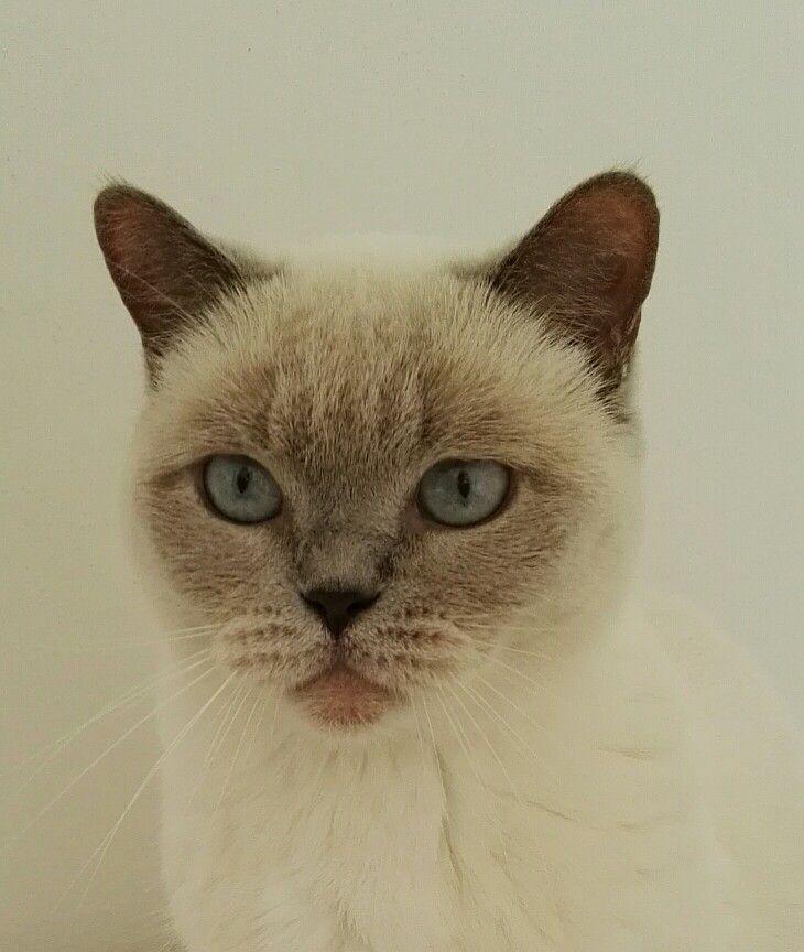Sweet cat. #lovely #cat