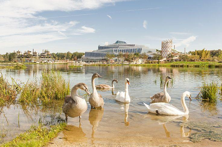 Villages Nature Paris: Neuer Ferienpark von Pierre & Vacances Center Parcs und Euro Disney ist Pionier für nachhaltigen Massentourismus.