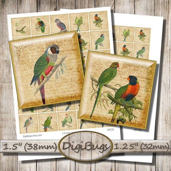 "Parrots on Vintage Background, Digital Collage Sheet, 1.5"" , 1.25"" Squares, Parrot Jewelry Images, Printable Parrots, Instant Download, a8"