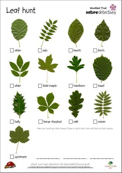 Leaf hunt for nature detectives. Outdoor activities with children. #nature #trees #outdoors