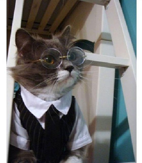 cat clothes - images - fashion365.com
