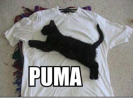 Funny Pictures - PUMA | A Collection of Clean Jokes/Humor