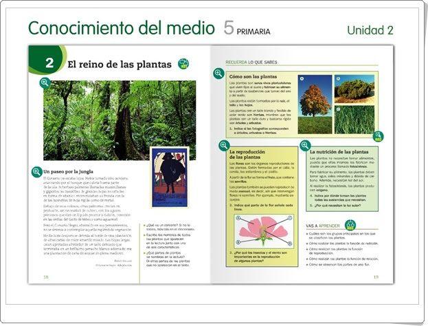 """Unidad 2 de Ciencias de la Naturaleza de 5º de Primaria: """"Las plantas"""""""