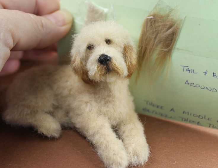 My Goldendoodle mini By teensyweensy13... Colour match.