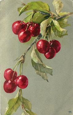 Cherries on branch. Possibly by Catherine Klein. Circa 1905.