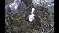 Watch the bald eagles live.  Awesome.