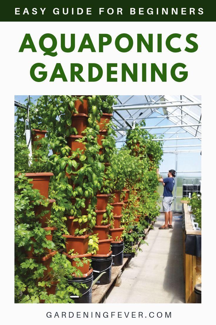 Aquaponics Gardening Easy Guide For Beginners Gardening Fever Aquaponics Greenhouse Aquaponic Gardening Aquaponics