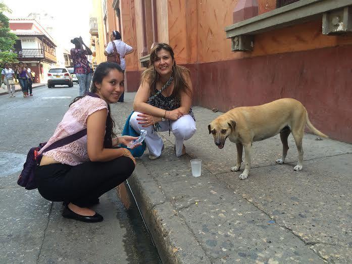 TIC love Pacha, #Cartagena 's fattest street dog.  Adoptar un #perro callejero con @AngelesConPatas #AdoptDontShop