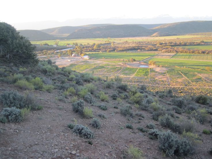 FARM FOR SALE 83 Hectare Sheep/ goat/ Ostrich farm for sale 3 Dwellings, Huge Factory Facility or storage 60Meters x 20 Meters. Lock stock and Barrel  KLEIN KAROO WESTERN CAPE SOUTH AFRICA. 3Hours drive from CAPE TOWN 21Hectares under LUCERNE only US$ 1Million  Contact +27285512030 or contact. londtstella52@gmail.com or rhynhardt4321@gmail.com for more info and Photos.