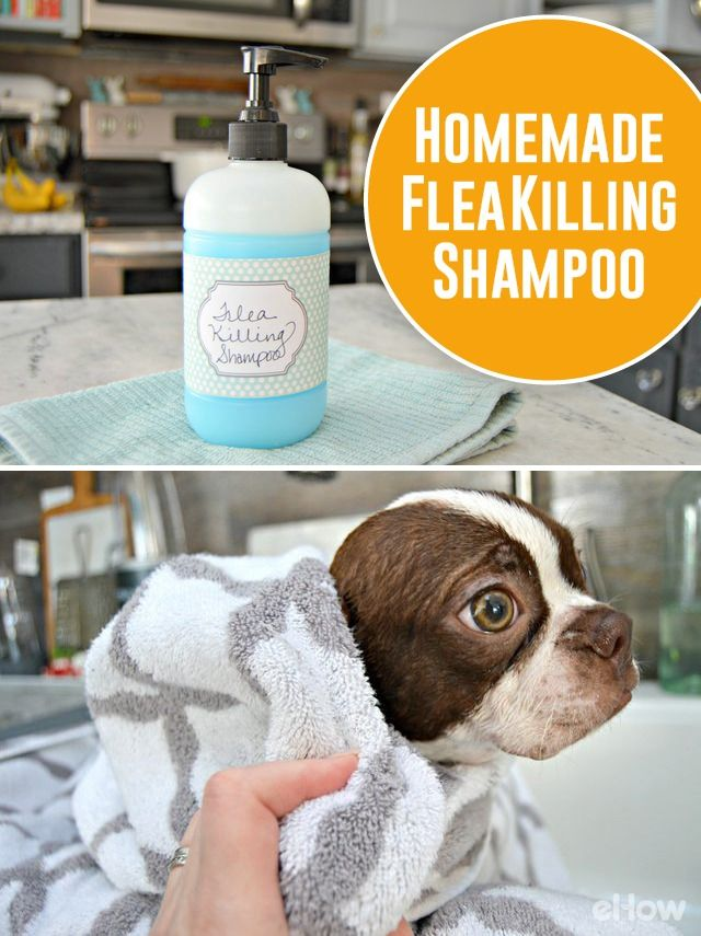 Help your furry family member get rid of fleas with this easy to make, safe homemade flea killing shampoo! DIY here: http://www.ehow.com/way_5455546_homemade-flea-shampoo.html?utm_source=pinterest.com&utm_medium=referral&utm_content=freestyle&utm_campaign=fanpage