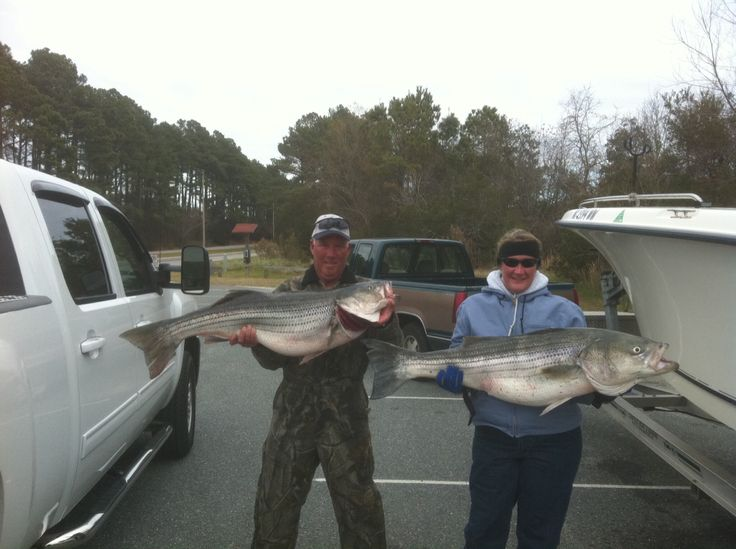 17 best images about fishing on pinterest for Striper fishing chesapeake bay