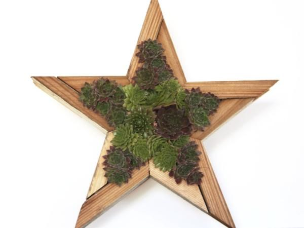 These rustic wood and sphagnum moss starsare made by a California artist! They are all made from reclaimed fence boards, and repurposed into unique succulent p