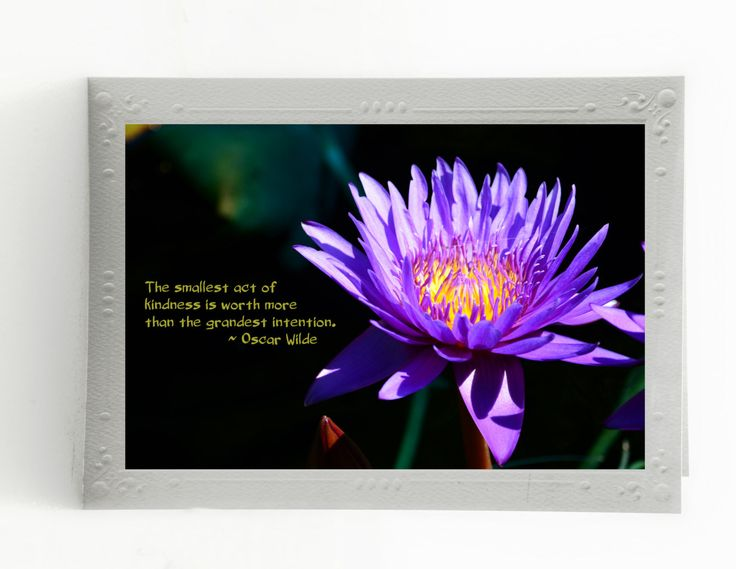 Say It With Flowers; Inspirational Quotes; Set of 3 Any Occasion Cards; Mounted Fine Art Photos; Custom Orders Available by MissmacMemories on Etsy