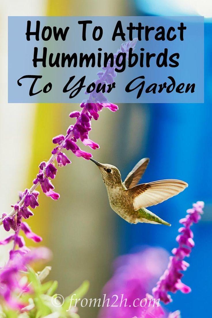 Hummingbird Garden Plants