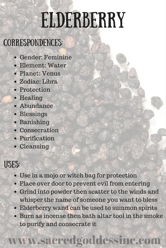 The Magick of Herbs: Elderberry (Printable for Your BOS) – Witches Of The Craft®