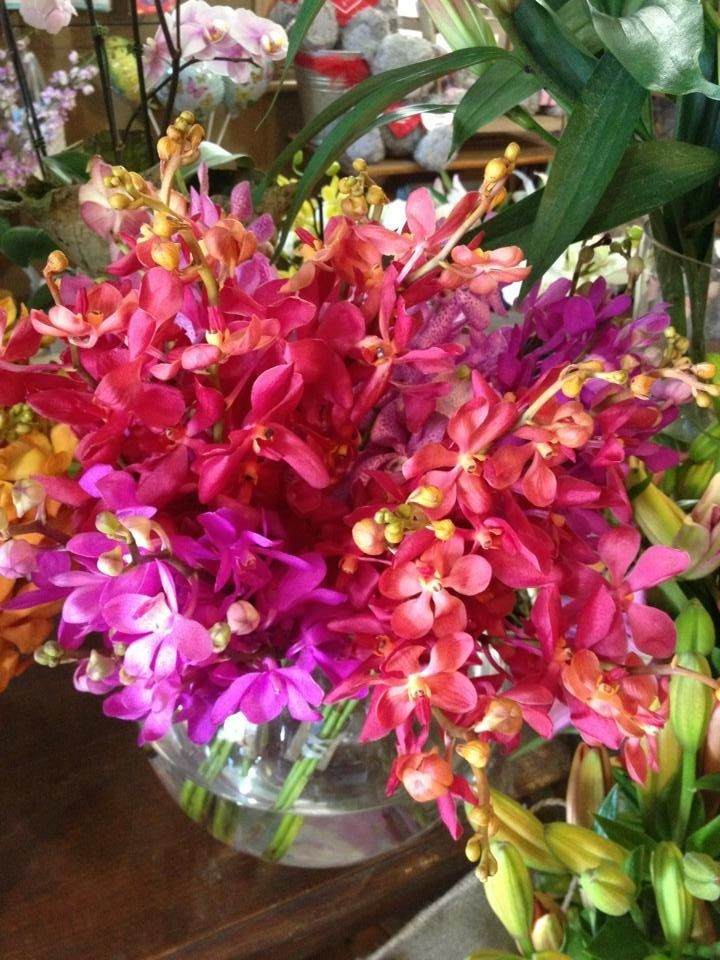beautiful vanda orchids