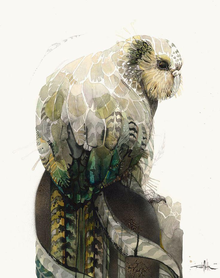 1000+ images about Kakapo art on Pinterest | New zealand ...