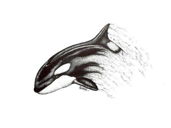 Orca www.GregLowmanArt.com Instagram - @greglowman