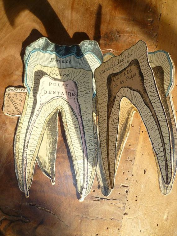 tooth inside: Tooth Books, Dental Booklet, Dolls Diagrams