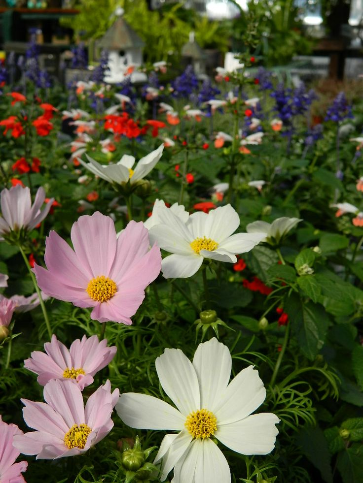 Colliers Nursery In Birmingham Al Has Everything You Ll Need To Make Your Spring Well Www Colliersnursery Water It Properly