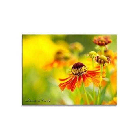 Blumenbild Goldener Herbst mit der Sonnenbraut