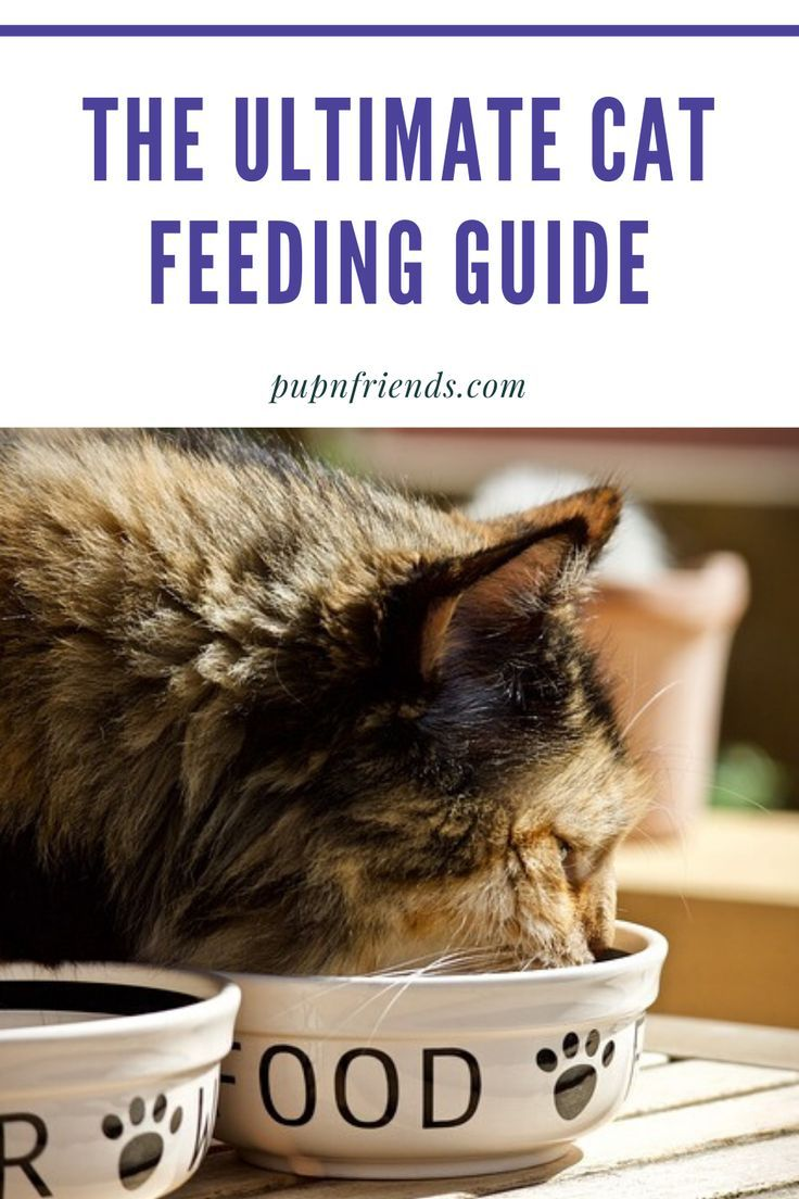 The Ultimate Cat Feeding Guide How Much To Feed A Cat In 2020 Cat Feeding Guide Feeding Kittens Cat Feeding