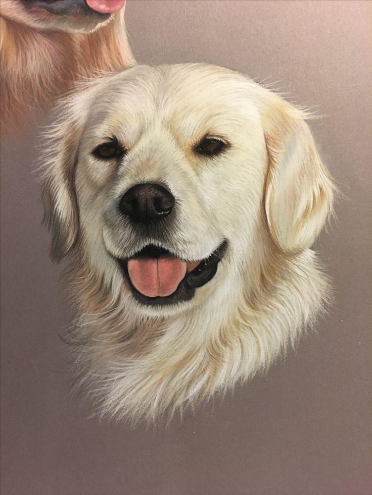 Golden retriever pastel dessin animalier r alis au pastel art animalier dog art tiere - Dessin golden retriever ...