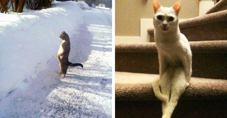 Solo los amantes de los gatos saben que, aunque sí, son completamente adorables, también son unos bichos raros que no logramos descifrar... aunque lo intentemos