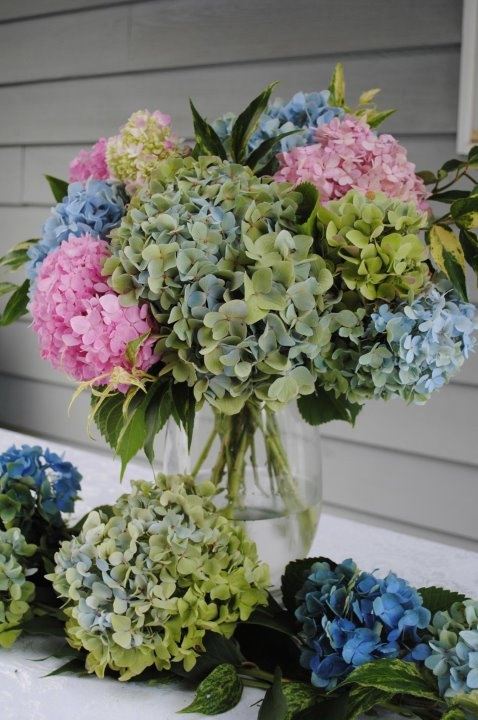 My hydrangeas. Food table centerpiece at my wedding.