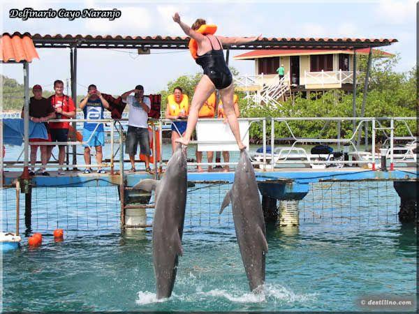 Dolphins and Sea Lions shows Holguin | Acuario Cayo Naranjo
