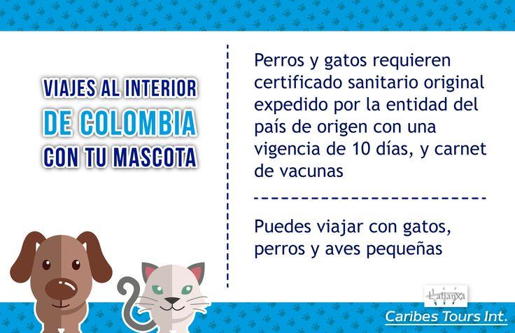 Viajes al interior de Colombia con tu mascota