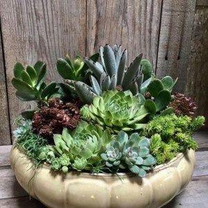 Mais informaçõesAs pessoas também amam estas ideias   – Succulents and Cacti