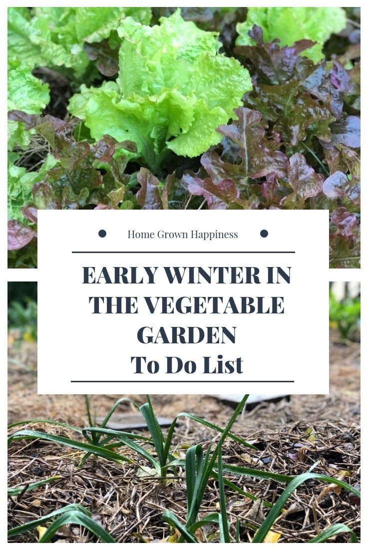 A To Do List For Your Winter Vegetable Garden Growing Winter