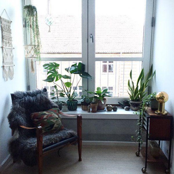 Chez vous: les plantes