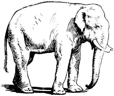 asia animal coloring pages | 59 best Elephants images on Pinterest | Elephants, Kids ...