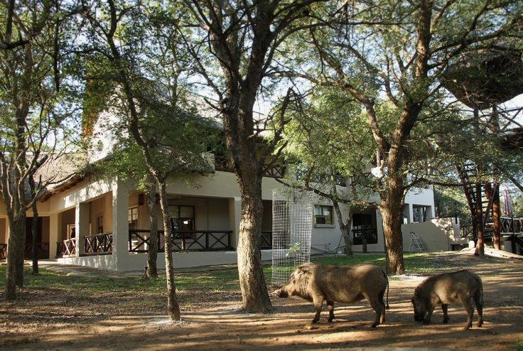 Eden Safari Country House is a fully self-contained & equipped modern holiday villa in the bush.  With a stunning view of nature and the animals sound all around you can escape the every day city life...  To book your stay and view available dates you can follow the link below: https://www.nightsbridge.co.za/bridge/book?bbid=22744
