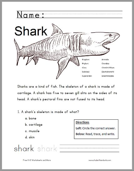Free Printable Shark Worksheet for Grades 1-3 - Kids read the informative text, answer a multiple-choice question, practice their handwriting/spelling, then color.