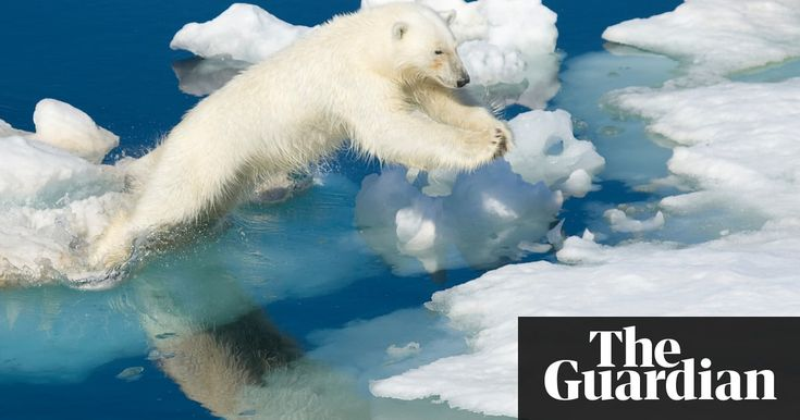 Record warmth in the Arctic this month could yet prove to be a freak occurrence, but experts warn the warming event is unprecedented