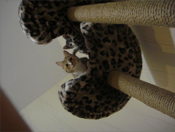 ¿Cómo construir un rascador para el gato: Things To, For, Cómo Construir, Rascador Para