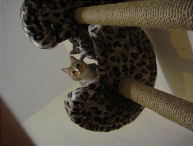 ¿Cómo construir un rascador para el gato: Construir Guarda-Roupa, For, The Cats, Кошки Своими, Для Кошки, Cómo Construir, Rascador Para, Cosa Para