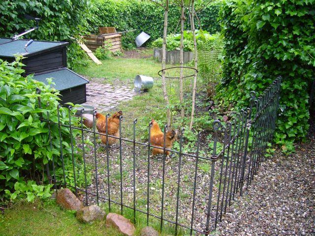 die Zaunelemente sind bei mir schon am 7.Juni eingetroffen. Wir sind sehr zufrieden und es ist so wie wir es uns vorgestellt haben.  Ich freue mich zusammen mit unseren 3 glücklichen Hühnern.  Viele Grüsse Manfred R Hühnerzaun anneau-80-roh: http://www.teichzaun.de/engm-Gartenzaun-engmaschig.php