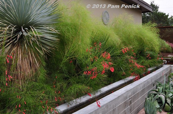 """I love this evergreen combination of bamboo muhly, firecracker fern (Russelia equisetiformis), and some variety of palm, with Yucca rostrata..."""