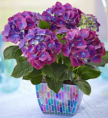 26 best 1800flowers coupon images on pinterest floral arrangements 1800flowershopping coupon code fandeluxe Choice Image