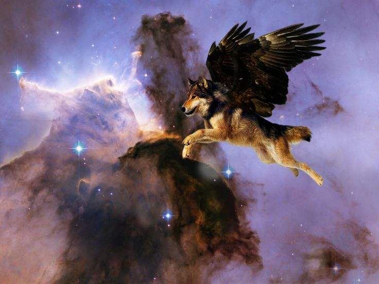 31 best Wolves with wings ♡♥♡ images on Pinterest   Wolves ...